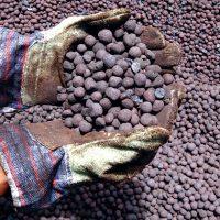 آغاز رفع محدودیتها از صادرات گندله